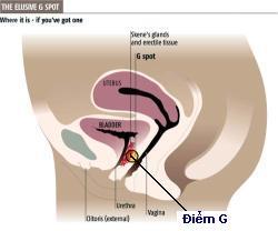 diem g, điểm g của phụ nữ